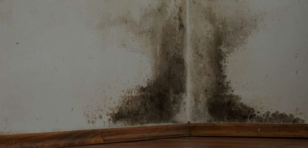 Mould contamination asbestos-removal-Tech-Clean-Property-Maintenance