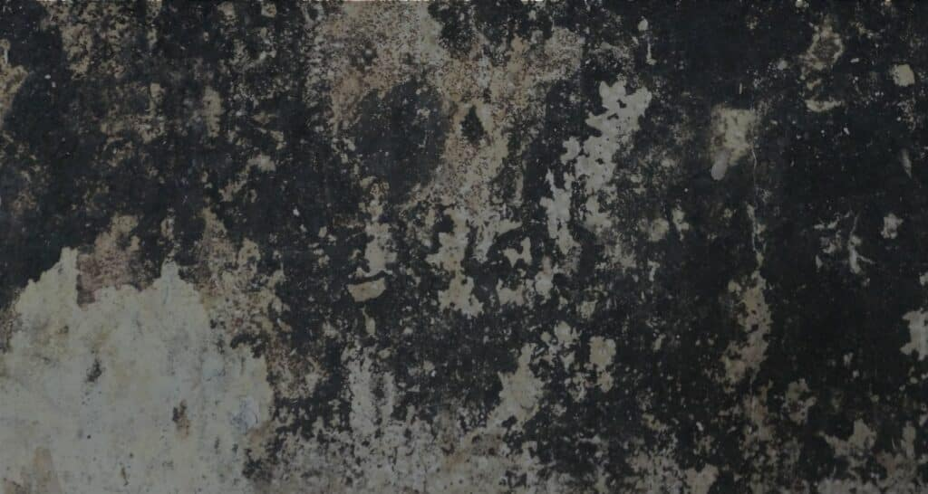 Do you have black mould How do you know what is black mould How can you remove it The science behind black mould. Mould removal TechClean Nelson Marlborough Christchurch Upper Hutt new zealand